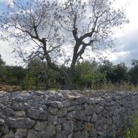 Puglia: Bari, Polignano a Mare y Alberobello
