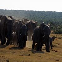 El parque nacional Addo en Sudáfrica: De safari en el Cabo Oriental