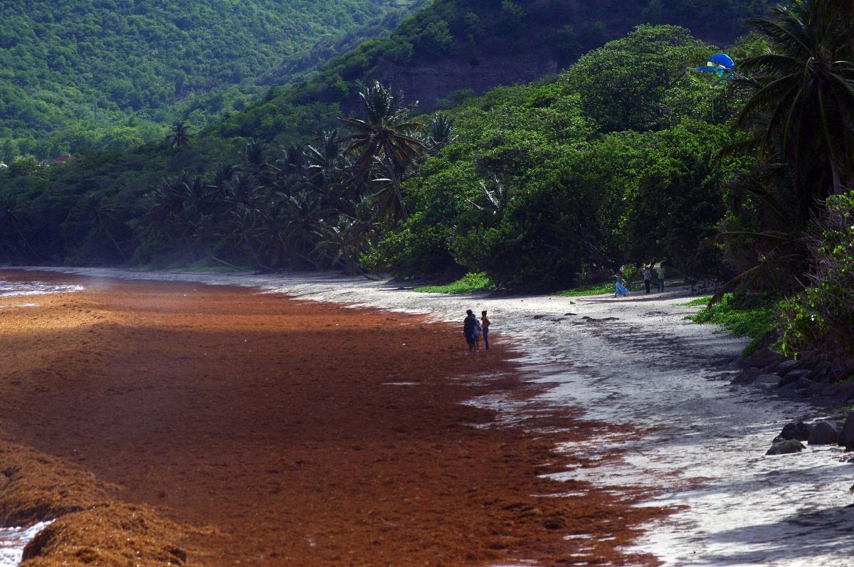 Marea Roja en el Caribe
