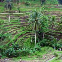 La isla de Bali, el imán turístico de Indonesia